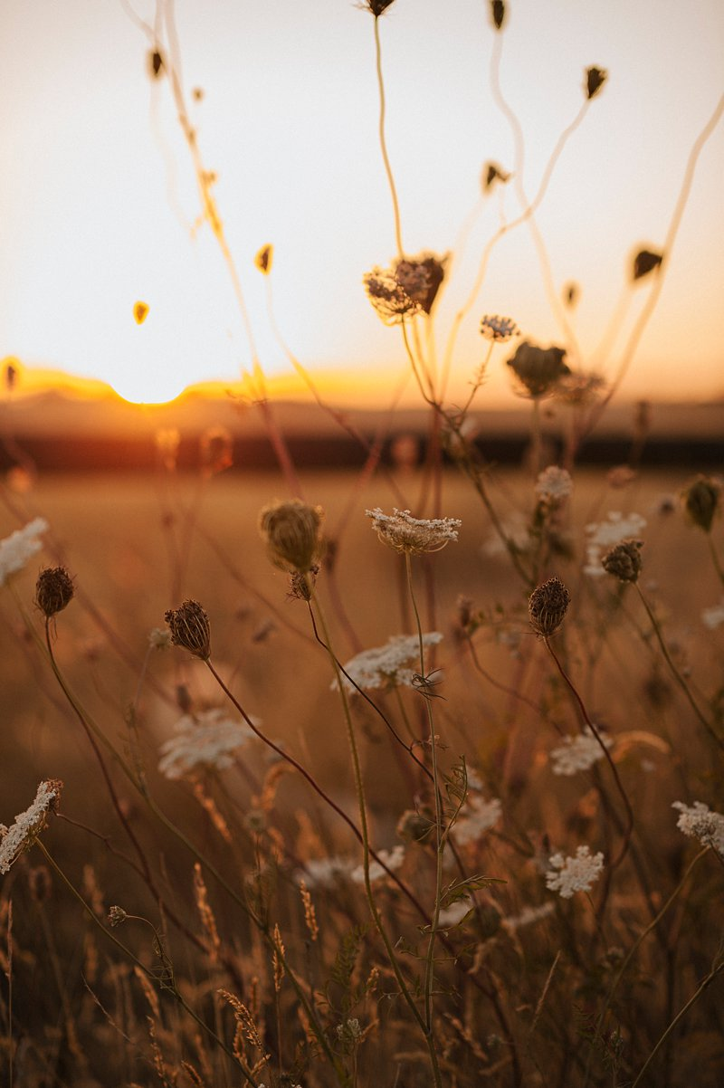 sunset flowers in field