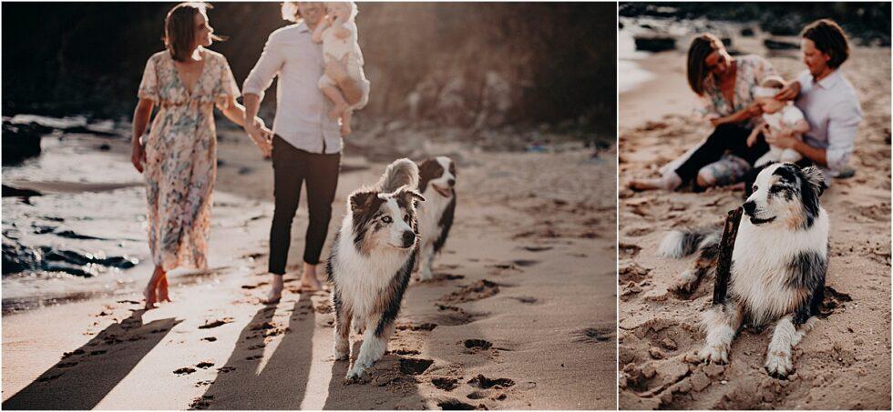Kilcunda beach dog portraits