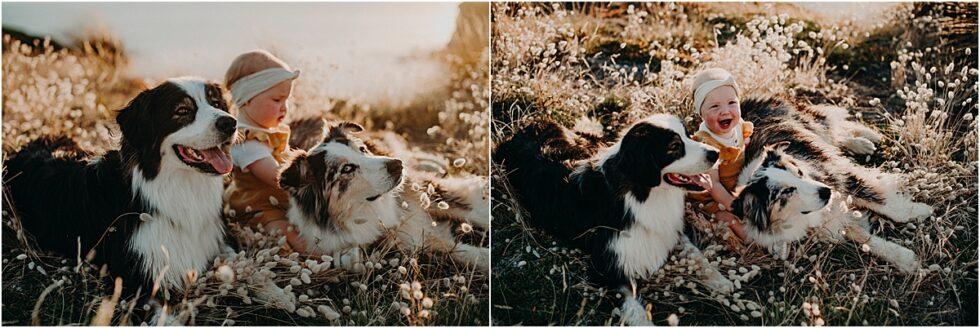 Kilcunda clifftop sunset shoot, 1st Birthday portrait Kilcunda, australian shepherds